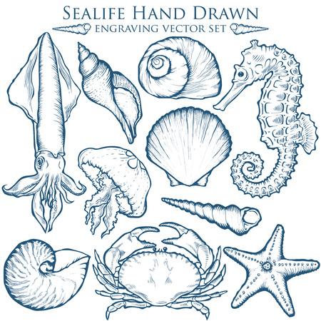 schelp, zeesterren natuur oceaan aquatisch onderwater set. marine gravure illustratie op witte achtergrond Stock Illustratie