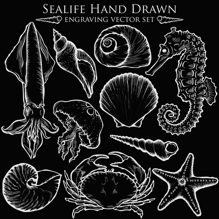 sea shell: sea shell, starfish nature ocean aquatic underwater set. marine engraving illustration on white background