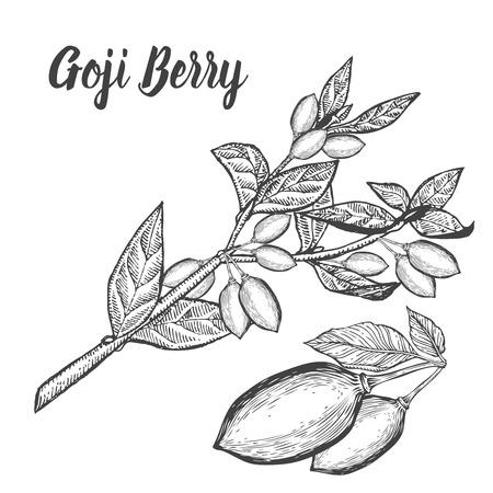 Goji berry superfood. Health nutrient food