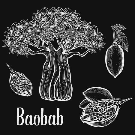 baobab: Baobab tree, fruit, leaf, nut engraving vintage set. illustration. White on black background.