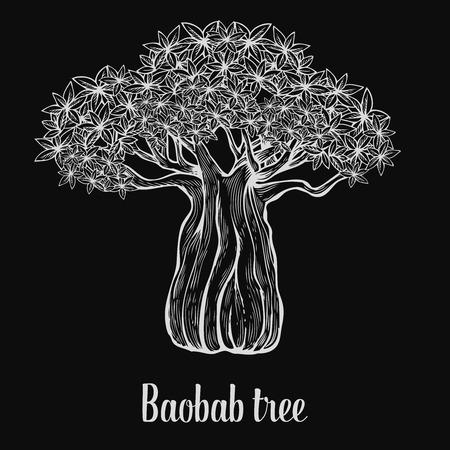 baobab: Baobab tree, leaf, engraving vintage set.  illustration. White on black background.