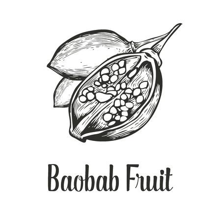 baobab: Baobab tree, fruit, nut engraving vintage set.  illustration. Black on white background.