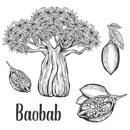 Baobab tree, fruit, leaf, nut engraving vintage set.  illustration. Black on white background. Vectores
