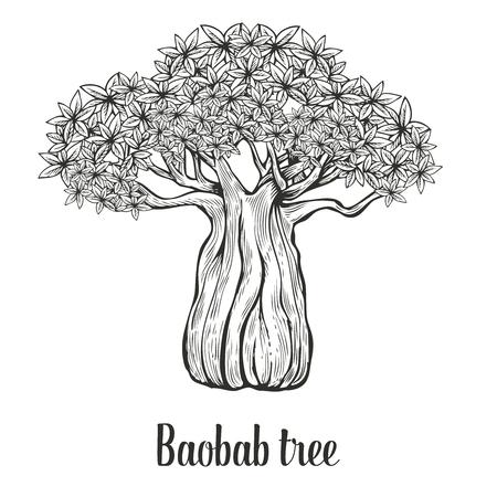 Baobab tree, leaf engraving vintage  illustration. Black on white background.