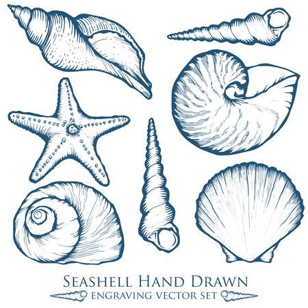 seashell: sea shell, starfish nature ocean aquatic underwater set.  marine engraving illustration on white background Illustration