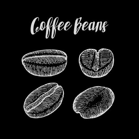 caffeine: Coffee bean, seed, natural organic caffeine fruit. illustration on chalkboard background.