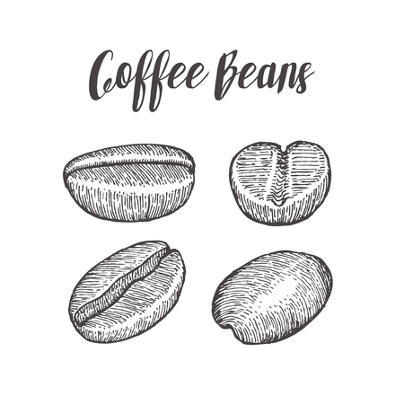caffeine: Coffee bean, seed, natural organic caffeine fruit.  illustration on white background.