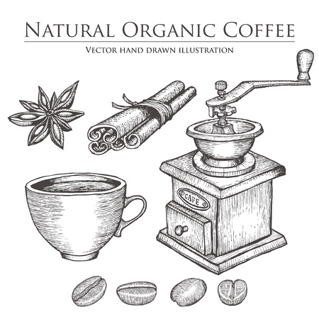 coffee bean: Coffee mill ,bean, seed, fruit, cinnamon, star anise, cup. Hot natural organic caffeine drink set.  illustration on white background. Illustration