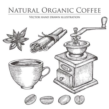 caffeine: Coffee mill ,bean, seed, fruit, cinnamon, star anise, cup. Hot natural organic caffeine drink set.  illustration on white background. Illustration