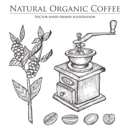 caffeine: Coffee branch plant with leaf, berry, bean, fruit, seed, mill. Natural organic caffeine drink.  illustration on white background.