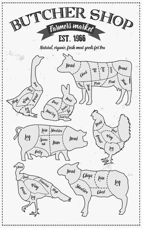 poultry: Cutting meat diagram guide cut scheme in vintage style. Chalk illustration graphic element for menu, banner. Steak cow pig chicken rabbit turkey goose duck lamb divided pieces. Silhouettes of animals.