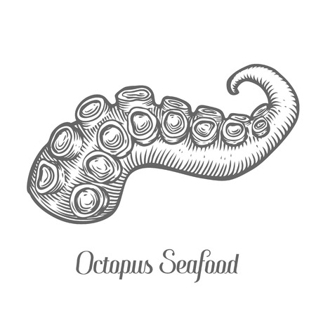 Octopus tentacle seafood marine animal sketch vector illustration. Octopus part hand drawn engraved etch ink cartoon illustration. Marine food. Healthy seafood. Organic product. Black on white background Vectores