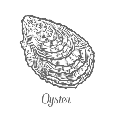 Closed oyster seafood marine animals sketch vector illustration. Clam scallop hand drawn engraved etch ink cartoon illustration. Marine food. Healthy seafood. Organic product. Black on white background