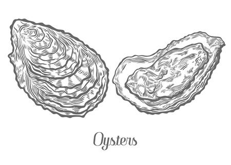 Ostrygi morskie zwierząt morskich szkic ilustracji wektorowych. Clam rębak ręcznie narysowany grawerowane etch atramentu ilustracji kreskówek. Żywność morska. Zdrowe owoce morza. Produkt ekologiczny. Czarny na białym tle