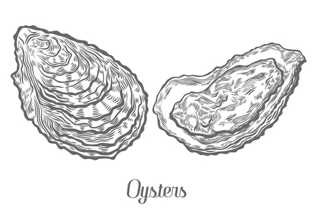 Oysters seafood marine animals sketch vector illustration. Clam scallop hand drawn engraved etch ink cartoon illustration. Marine food. Healthy seafood. Organic product. Black on white background Ilustração