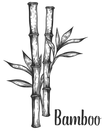 Bamboo stem branches and leaf vector hand drawn illustration. Black on white background. Engraving style. 向量圖像