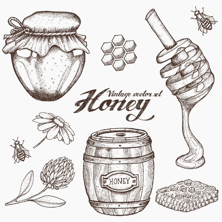 Honey jar, barrel, spoon, bee, honeycomb, chamomile, clover, vintage vector set. Engraved organic food hand drawn sketch illustration. Иллюстрация