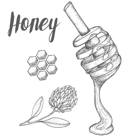Honey  spoon, honeycomb, clover, vintage vector set. Engraved organic food hand drawn sketch illustration.