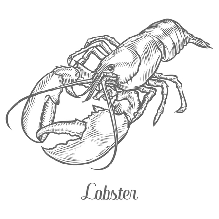 Lobster, omar, cancer sketch vector illustration. Fresh lobster. Hand drawn engraved etch ink illustration. Marine food. Healthy seafood. Organic product. Black on white background Иллюстрация