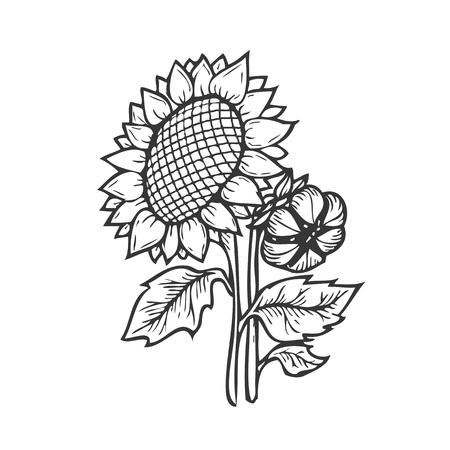 Zonnebloem graveren. Vector hand getrokken illustratie zonnebloemen op een witte achtergrond in retro stijl