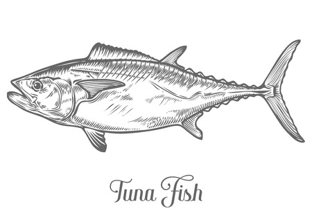 Tuna fish cartoon animals sketch vector illustration. Yellowfin tuna in fast motion. Hand drawn engraved etch ink illustration. Marine food. Healthy seafood. Organic product. Black on white background Vettoriali