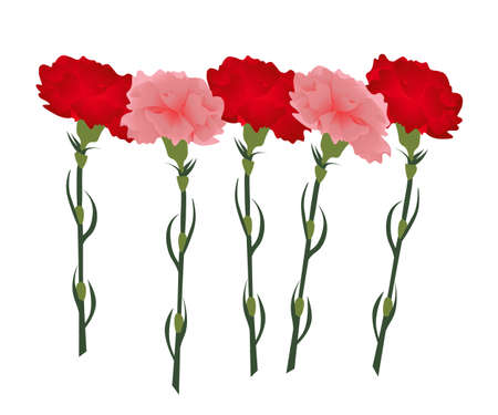 carnations: red and pink carnations on white background Illustration