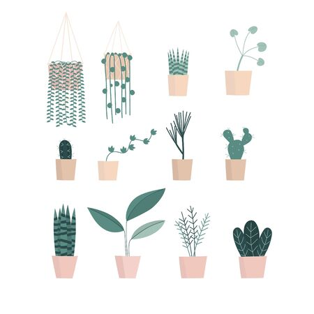 Houseplant flower pot collection. Set of macrame hangers for plants growing in pots. Flowerpot isolated objects. Vector illustration. Illusztráció