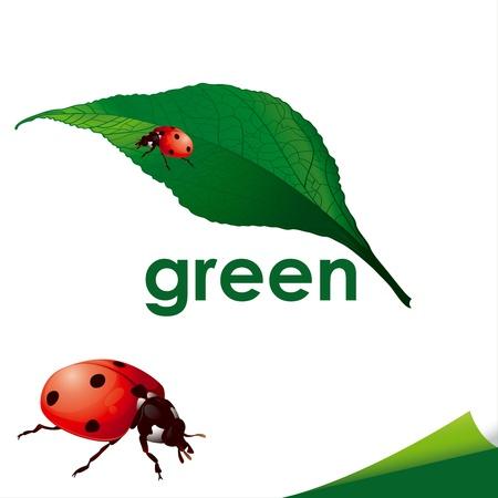 lady beetle: Ladybug On Green Leaf isolated on white background Illustration