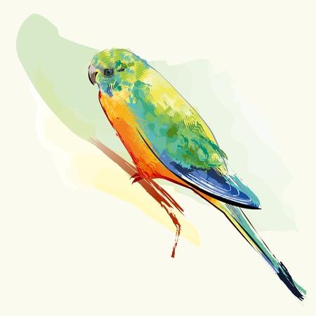 perico: Aves de Perico con plumas coloridas Vectores