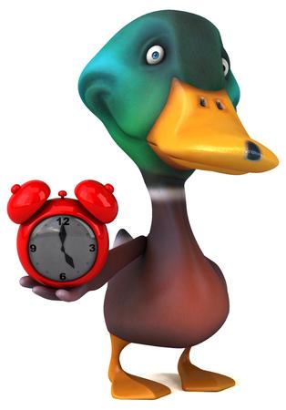 drake: Duck Stock Photo