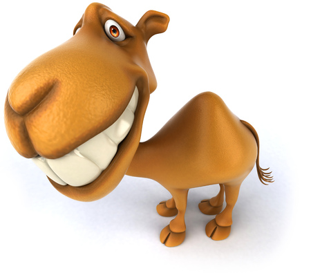 Camel grinning Stock Photo