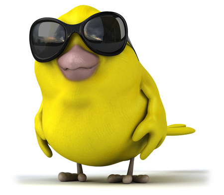 songbird: Yellow bird
