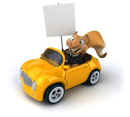 zoo traffic: Fun squirrel