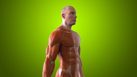 anatomic: Anatomy