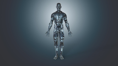anatomically: Anatomy