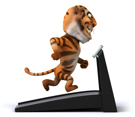 Tiger running on treadmill