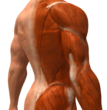 Human anatomy Stock Photo