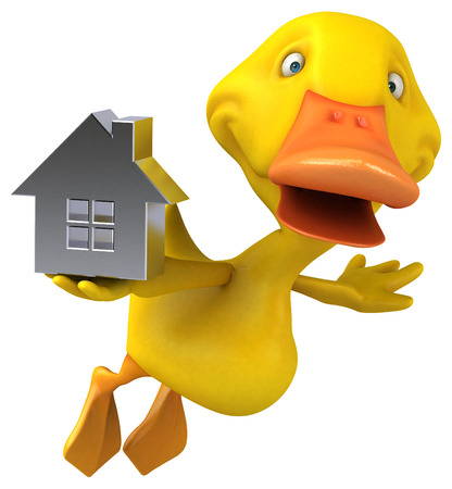 waterbird: Duck Stock Photo