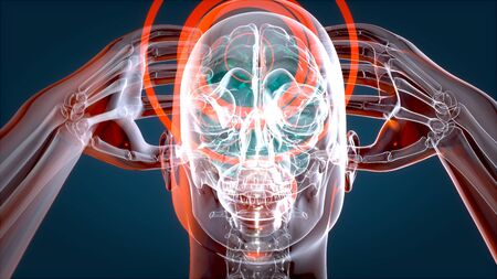Human and brain xray, human anatomy, 3D Illustration