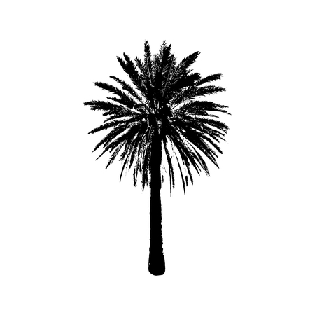 Hand drawn Palm Tree isolated on white background. Tropical Design element for t-shirt prints, textile. Vector illustration EPS 10 file