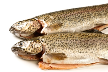 Trout eviscerated, ready to cook photo