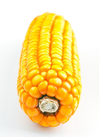 dry corn cobs recently harvested Stock Photo - 15714413