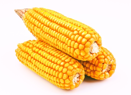 recently: dry corn cobs recently harvested Stock Photo