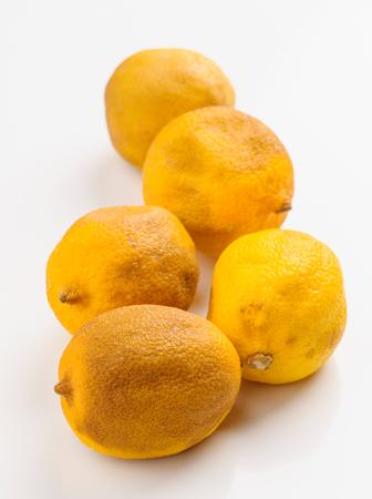 putrid: rotten lemons on white base Stock Photo