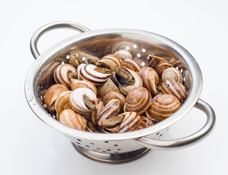 gastropod: uncooked snails in metal colander on white background