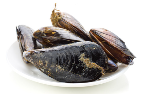 unboiled: fresh mussels in net isolated on white background