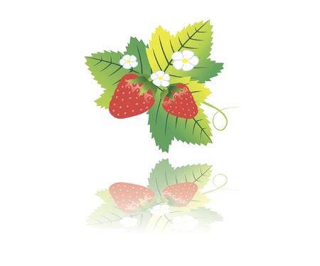 wild strawberry: wild strawberry Illustration