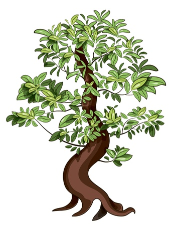 illustratie van japan decoratieve ficus Bonsai