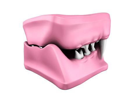 fang: 3d model of cat teeth cast. Back view.