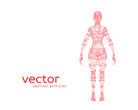 Abstract vector illustration of female body on white background. Front view. Illustration